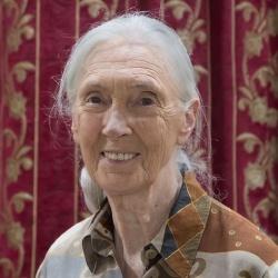 Jane Goodall - Scientifique