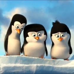 Les pingouins de madagascar - Personnage d'animation