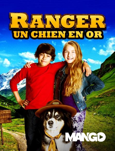 Mango - Ranger, un chien en or