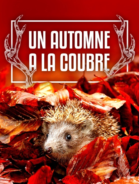 Un automne à la Coubre