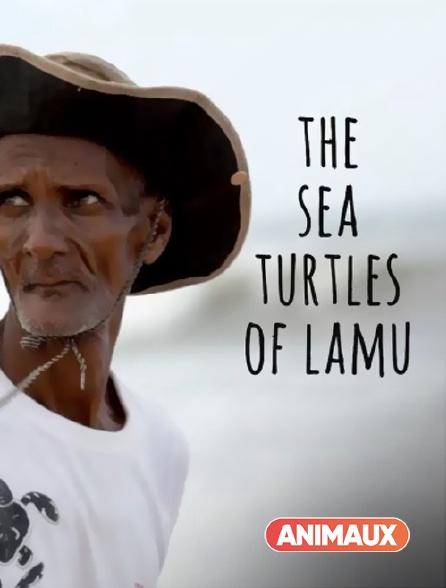 Animaux - The Sea Turtles of Lamu