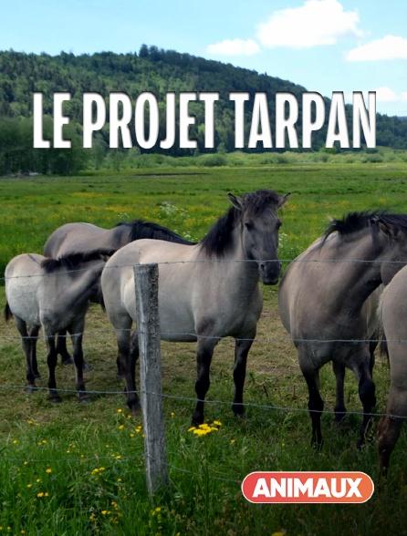 Animaux - Le projet Tarpan