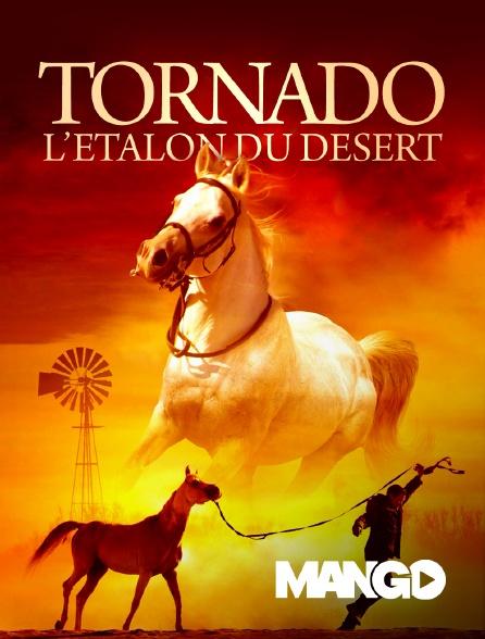 Mango - Tornado, l'étalon du désert