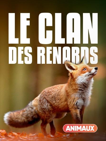 Animaux - Le clan des renards