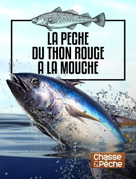 Chasse et pêche - La pêche du thon rouge à la mouche