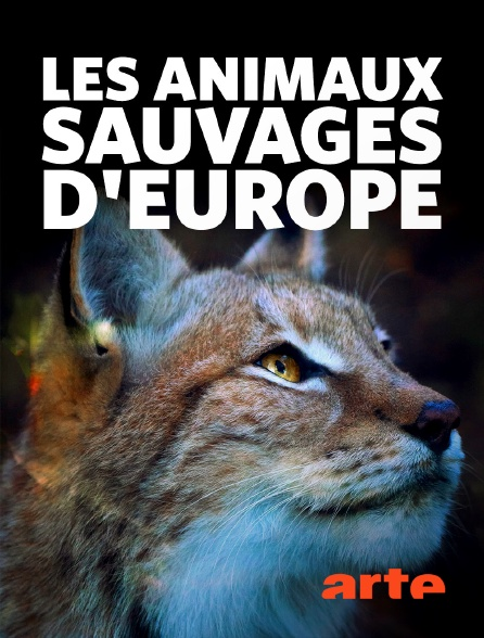 Arte - Les animaux sauvages d'Europe