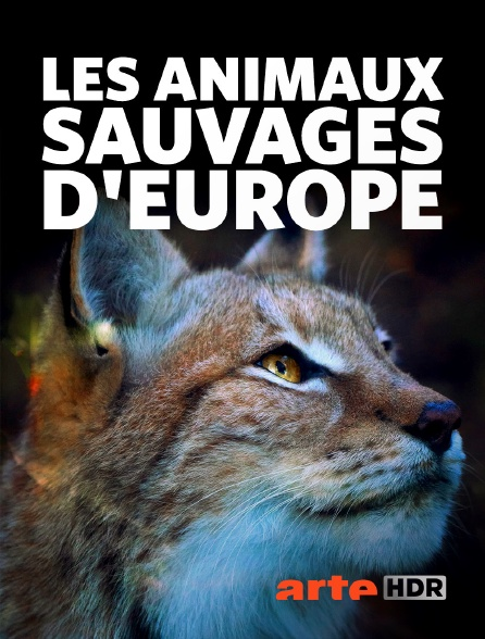 Arte HDR - Les animaux sauvages d'Europe