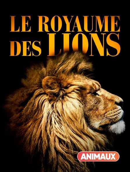 Animaux - Le royaume des lions