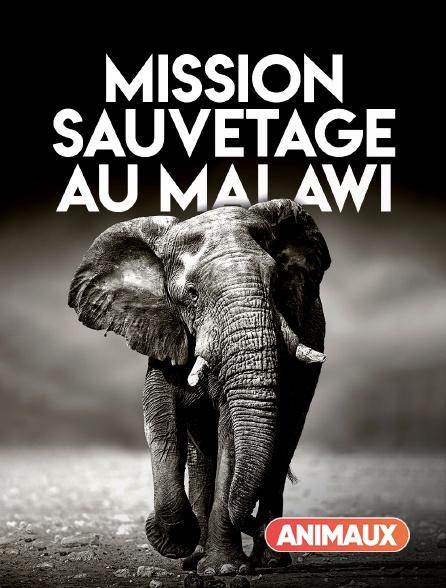 Animaux - Mission sauvetage au Malawi