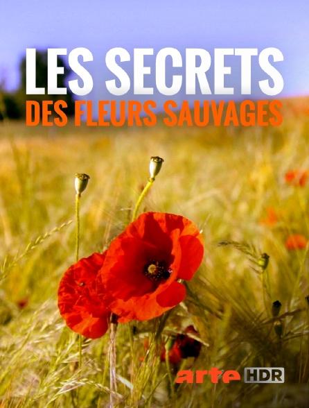 Arte HDR - Les secrets des fleurs sauvages