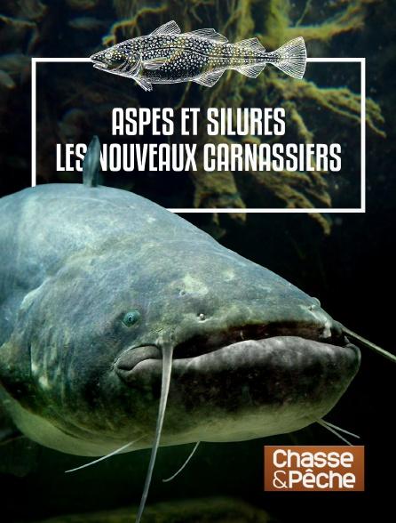 Chasse et pêche - Aspes et silures : les nouveaux carnassiers