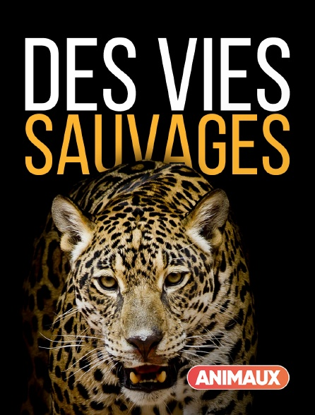 Animaux - Des vies sauvages