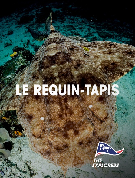 The Explorers - Le requin-tapis