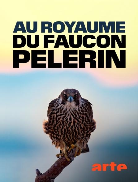 Arte - Au royaume du faucon pèlerin