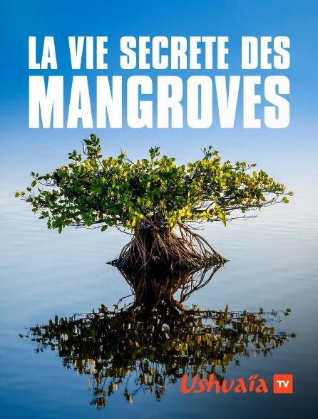 Ushuaïa TV - La vie secrète des mangroves