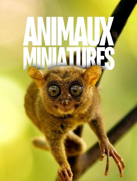 Animaux miniatures