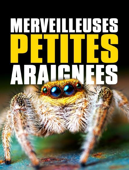 Merveilleuses petites araignées