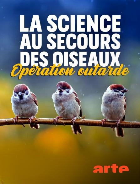 Arte - La science au secours des oiseaux : Opération outarde