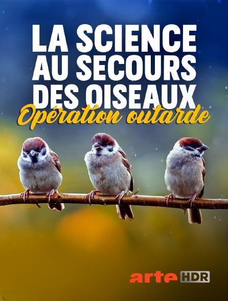 Arte HDR - La science au secours des oiseaux : Opération outarde