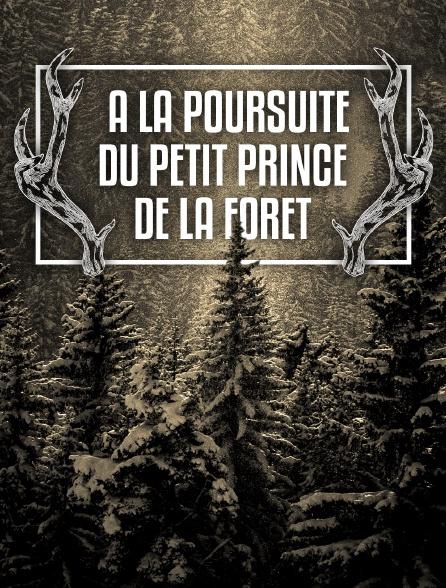 A la poursuite du petit prince de la forêt