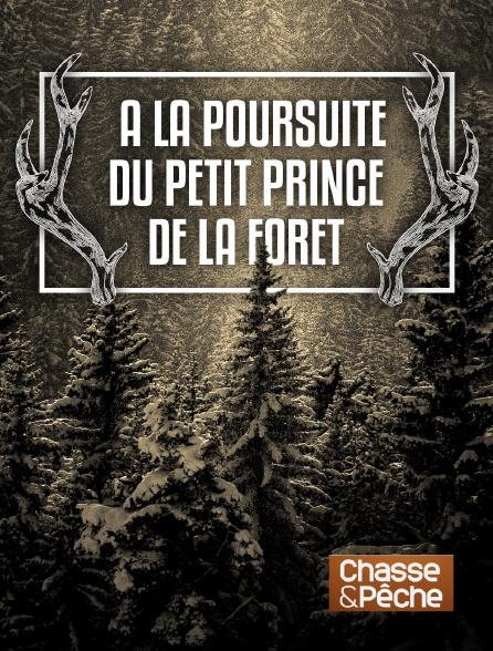Chasse et pêche - A la poursuite du petit prince de la forêt