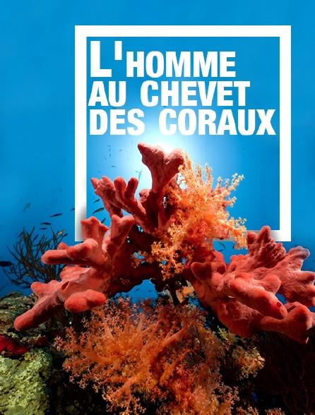 L'homme au chevet des coraux