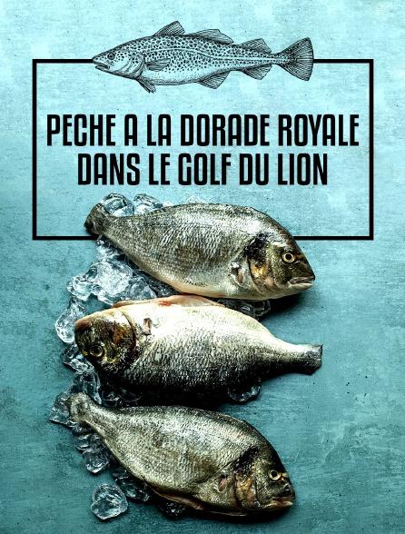 Pêche à la dorade royale dans le golf du Lion