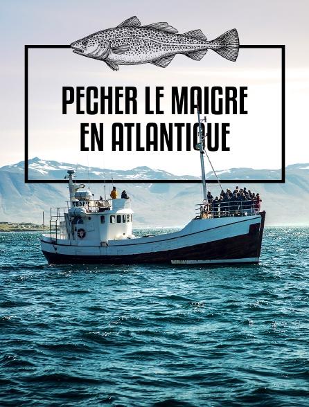 Pêcher le maigre en Atlantique