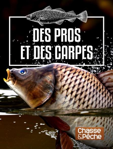 Chasse et pêche - Des pros et des carpes