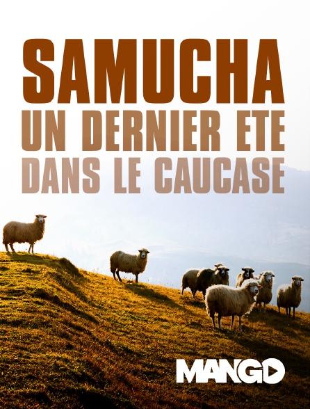 Mango - Samucha, un dernier été dans le Caucase