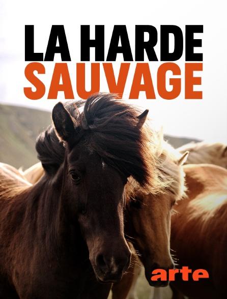 Arte - La harde sauvage : Libres chevaux de Sardaigne
