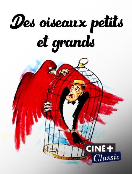 Ciné+ Classic - Des oiseaux petits et grands