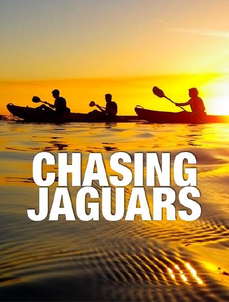 Chasing Jaguars