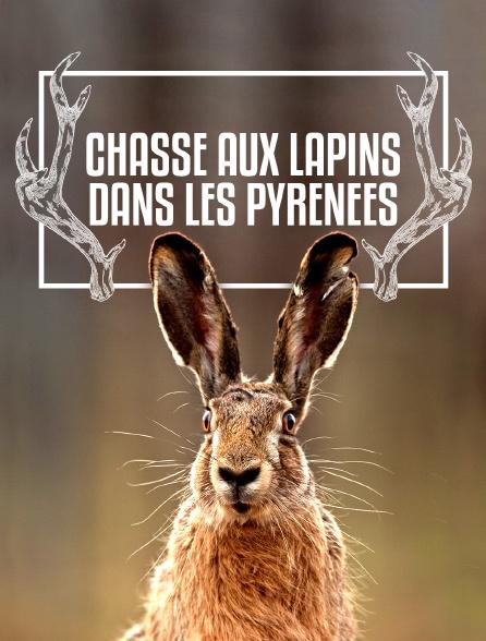 Chasse aux lapins dans les Pyrénées