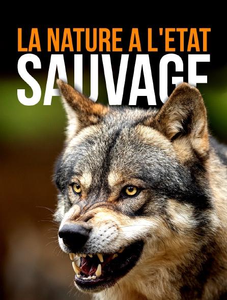 La nature à l'état sauvage