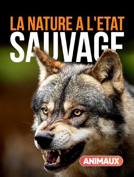 Animaux - La nature à l'état sauvage
