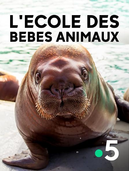 France 5 - L'école des bébés animaux