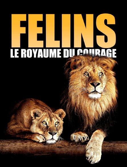 Félins: Le royaume du courage