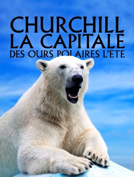 Churchill, la capitale des ours polaires, l'été