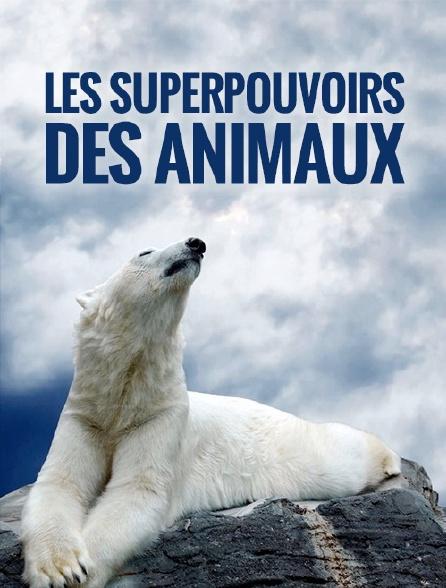 Les superpouvoirs des animaux