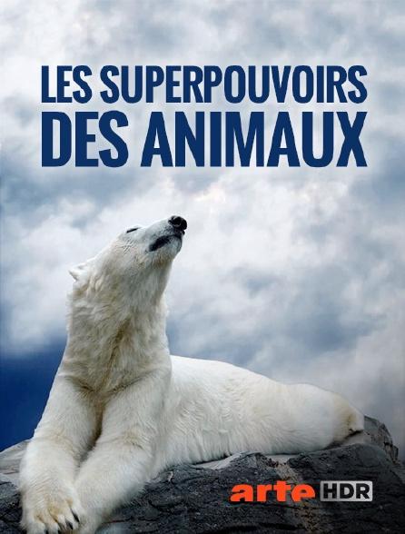 Arte HDR - Les superpouvoirs des animaux