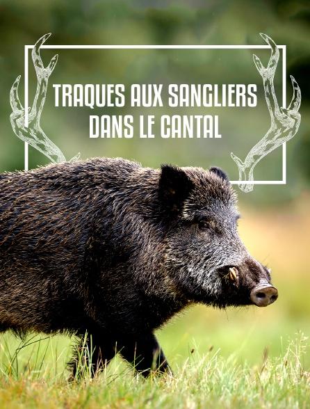 Traques aux sangliers dans le Cantal