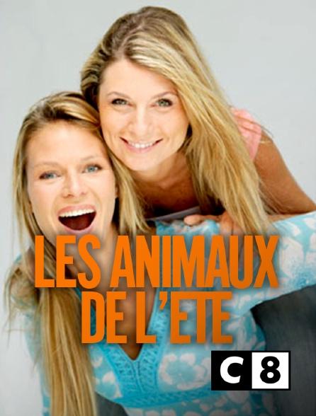 C8 - Les animaux de l'été