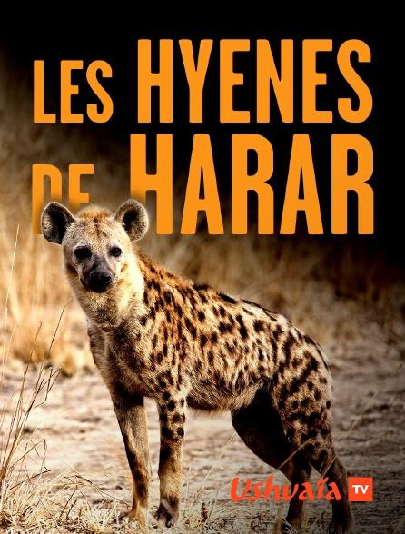 Ushuaïa TV - Les hyènes de Harar
