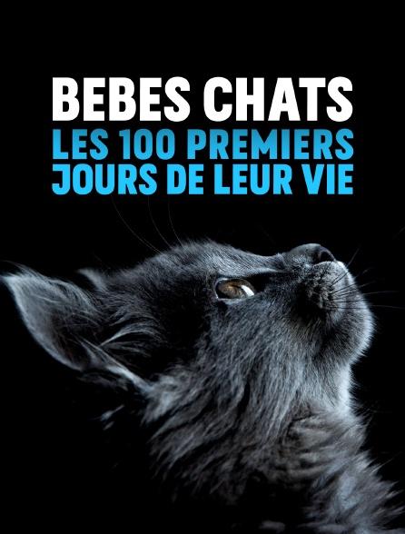 Bébés chats : les 100 premiers jours de leur vie