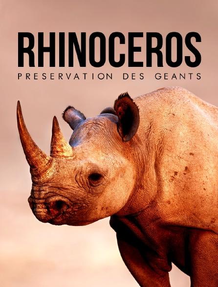 Rhinocéros : préservation des géants