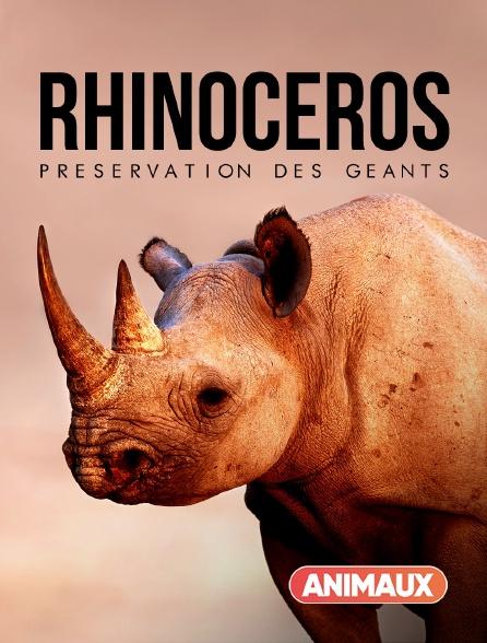 Animaux - Rhinocéros : préservation des géants