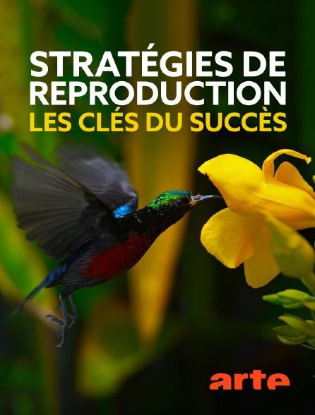Arte - Stratégies de reproduction : les clés du succès