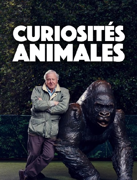 Curiosités animales
