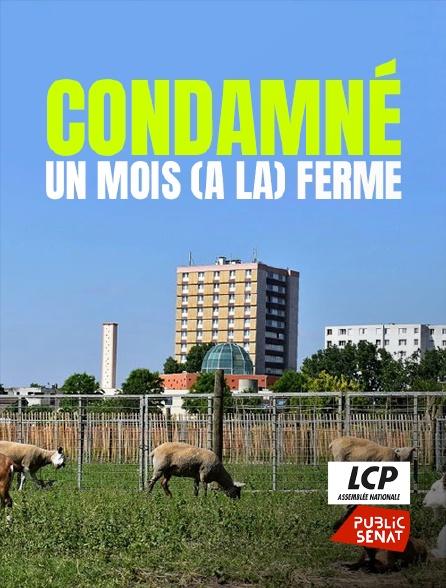 LCP Public Sénat - Condamné : un mois (à la) ferme